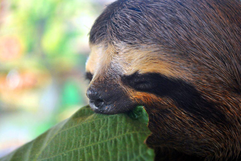 Amazon-Rainforest-3-1024x685